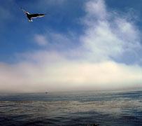 freedom-bird-in-flight