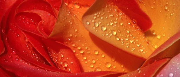 wedding flower close-up