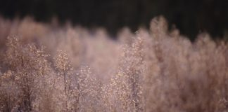 field growth