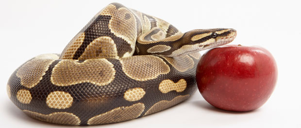 https://www.ignatianspirituality.com/wp-content/uploads/2015/06/snake-and-apple.jpg