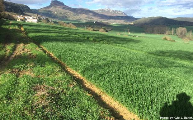 Camino Ignaciano path 2
