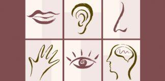 five senses and brain