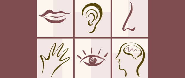 five senses and brain