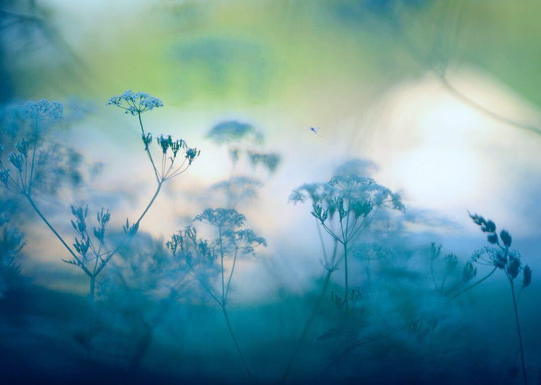 soft focus blue summer flowers - Eerik/iStock/Getty Images