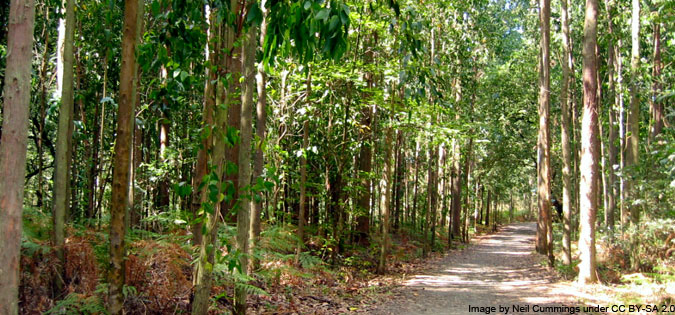 eucalyptus forest on el Camino de Santiago - image by Neil Cummings under CC BY-SA 2.0