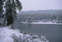 winter scene - gray