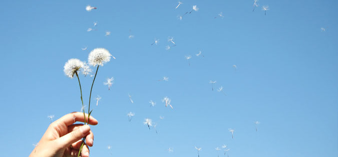 dandelion blowing away - image of freedom