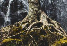 tree roots - photo by Zach Reiner on Unsplash