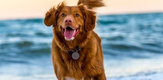 dog at beach - photo by Oscar Sutton on Unsplash