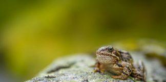 toad on moss - photo by Janko Ferlič on Unsplash
