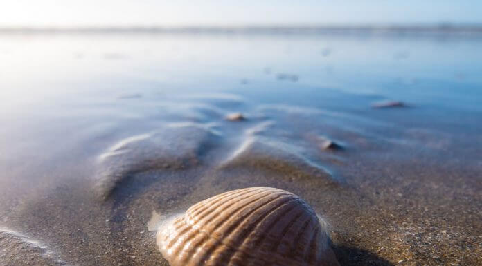 seashell on beach - photo by Wynand van Poortvliet on Unsplash
