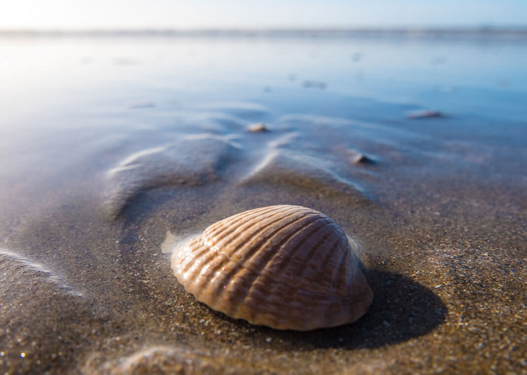 seashell on beach - photo by Wynand van Poortvliet on Unsplash