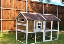 chicken coop - image courtesy of Gretchen Crowder