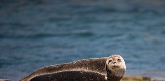 seal on rocks - photo by Ramon Vloon on Unsplash