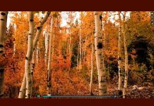 screenshot of How Do You Want Others to Remember You? video showing autumn trees