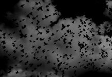 nighttime birds - photo by Pelly Benassi on Unsplash