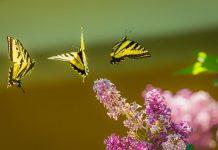 butterflies symbolizing hope - photo via Unsplash