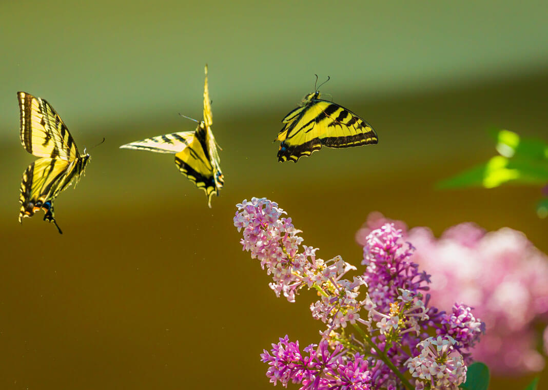 butterflies symbolizing hope - photo via Unsplash