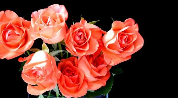 roses in vase - image by AliceKeyStudio from Pixabay