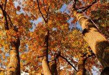 autumn oak trees - photo by Malachi Brooks on Unsplash