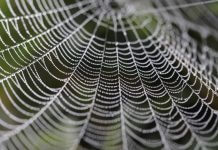 cobweb - photo by PIXNIO