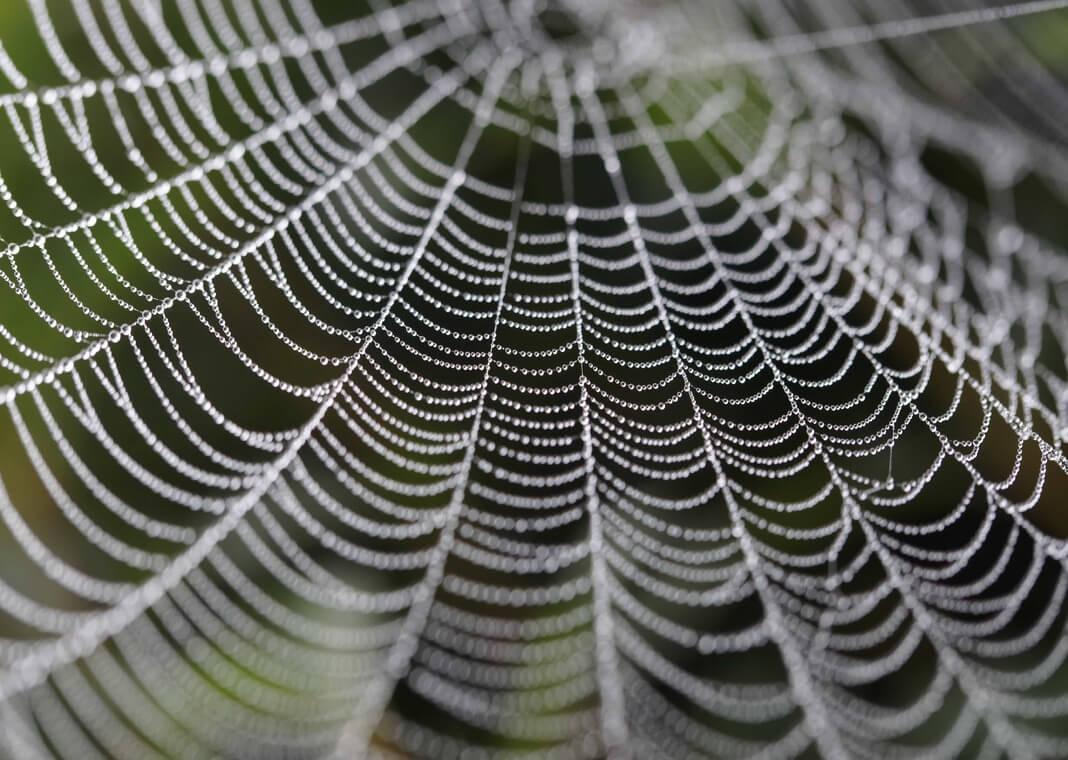 cobweb - photo by PIXNIO