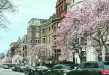 magnolia trees lining street - image courtesy of Marina McCoy