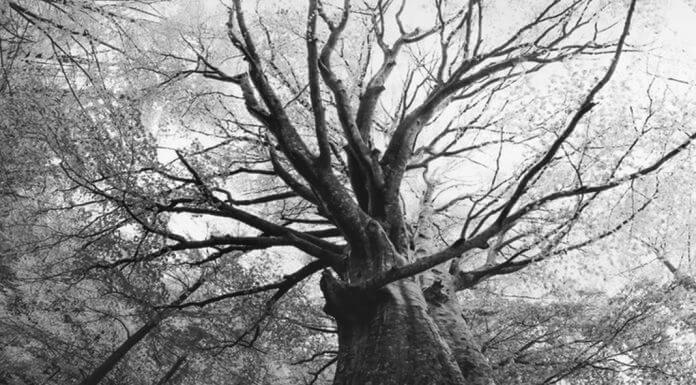 grayscale tree seen from below - original color photo by Artur Debat/Moment RF/Getty Images