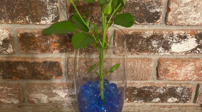 blue water beads in vase - image provided by Loretta Pehanich